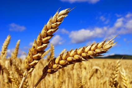 """""""Русагро"""" отреагировал на введение экспортных пошлин на зерно"""
